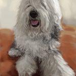 毛の多い犬の似顔絵