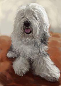 習作です。毛の多い犬の似顔絵、オールドイングリッシュシープドッグです。